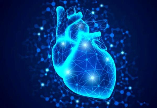 مینی قلب با استفاده از سلول های بنیادی,اخبار پزشکی,خبرهای پزشکی,تازه های پزشکی
