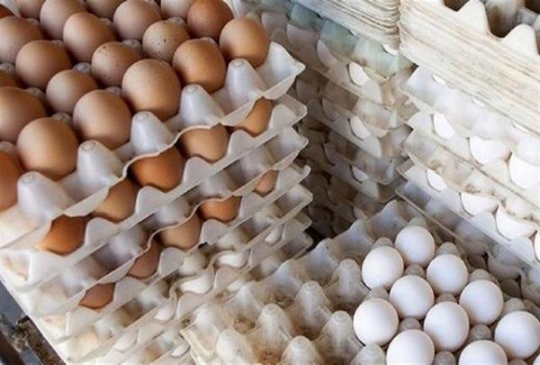 وزیر کشاورزی: قیمت تخم مرغ تا دو روز دیگر دوباره ۱۴۵۰۰ تومان میشود