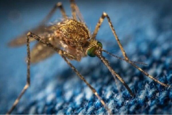 ویروس ای ای ای,اخبار پزشکی,خبرهای پزشکی,بهداشت