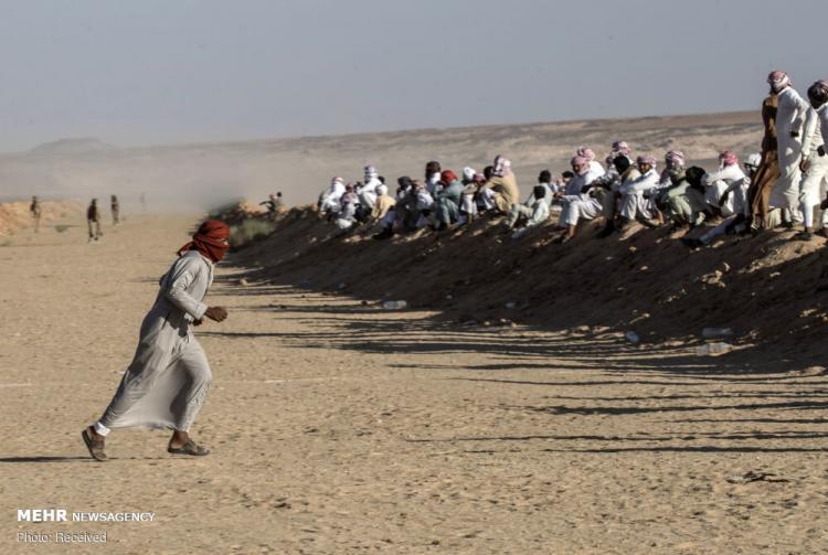 تصاویر مسابقات شتردوانی در مصر,عکس های مسابقات شتر سواری در مصر,تصاویر شتر سواری در مصر
