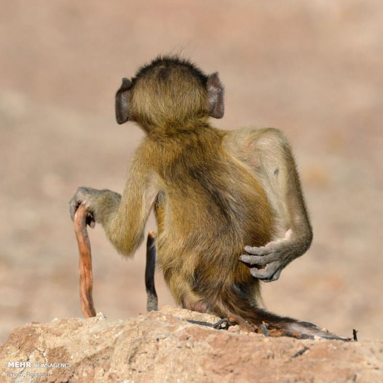 تصاویر برگزیدگان مسابقه عکاسی کمدی حیات وحش ۲۰۲۰,عکس های کمدی از حیوانات,تصاویر مسابقه عکاسی کمدی از حیات وحش