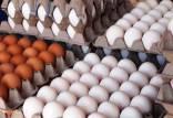 قیمت تخم مرغ,اخبار اقتصادی,خبرهای اقتصادی,کشت و دام و صنعت
