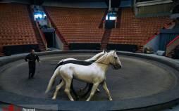 تصاویر بزرگترین سیرک مسکو در زمان قرنطینه,عکس های سیرک مسکو,تصاویر برگزاری سیرک در روسیه