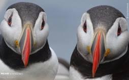 برترین عکسهای حیات وحش ۲۰۲۰,تصاویر حیات وحش,مسابقه عکاسی حیات وحش