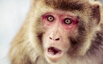 قانون اساسی برای میمونهای سوئیسی,اخبار جالب,خبرهای جالب,خواندنی ها و دیدنی ها
