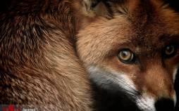 تصاویر برندگان مسابقه عکاسی حیات وحش,عکس های حیات وحش,تصاویری از مسابقه عکاسی حیات وحش