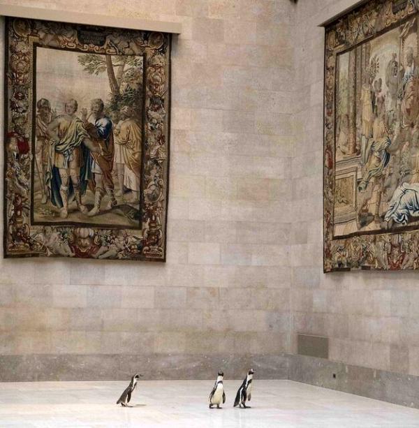 بازدید پنگوئن از آثار هنری,اخبار جالب,خبرهای جالب,خواندنی ها و دیدنی ها