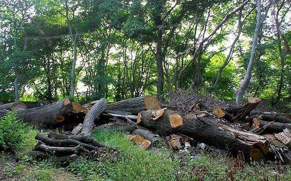 نابودی ۸۰ درصدی جنگلها و منابع طبیعی ایران