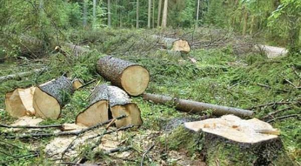 نابودی جنگل ها و منابع طبیعی ایران,اخبار اجتماعی,خبرهای اجتماعی,محیط زیست