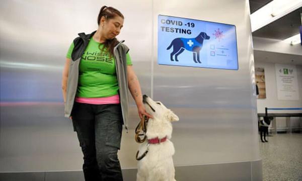 شناسایی کرونا با سگ,اخبار علمی,خبرهای علمی,پژوهش