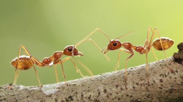 فروش مورچهها در سنگاپور,اخبار جالب,خبرهای جالب,خواندنی ها و دیدنی ها