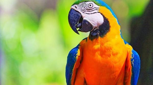 اخراج ۵ طوطی بدزبان از باغوحشی در انگلستان,اخبار جالب,خبرهای جالب,خواندنی ها و دیدنی ها