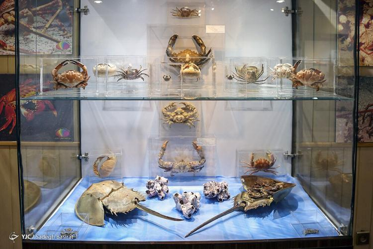 تصاویر موزه صدف در اصفهان,عکس های موزه صدف اصفهان,تصاویری از موزه صدف در شهر اصفهان