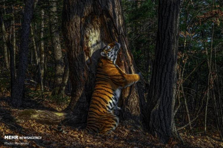 تصاویر برندگان مسابقه عکاسی حیات وحش موزه تاریخ طبیعی,عکس های مسابقه عکاسی حیات وحش موزه تاریخ طبیعی