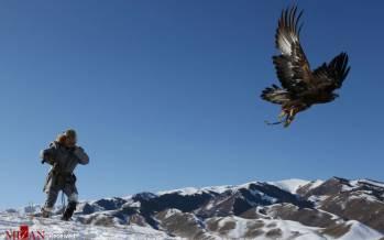 تصاویر مراحل شکار با عقاب در قزاقستان,عکس های شکار با عقاب,تصاویری از شکار با عقاب