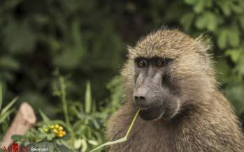 تصاویر میمون,عکس هایی از میمون,تصاویر میمونهای بامزه و خطرناک