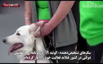 فیلم/ سگهایی که ویروس کرونا را تشخیص میدهند