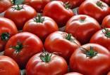 نرخ گوجه فرنگی و برنج در بازار,اخبار اقتصادی,خبرهای اقتصادی,کشت و دام و صنعت