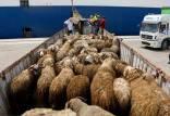 شیوخ عرب مشتریان گوسفندان ایران,اخبار اقتصادی,خبرهای اقتصادی,کشت و دام و صنعت