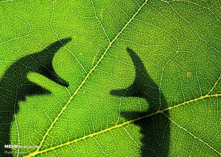 برندگان مسابقه عکاسی از حشرات لومینار ۲۰۲۰,تصاویر مسابقه عکاسی لومینار ۲۰۲۰,عکس های مسابقه عکاسی لومینار ۲۰۲۰