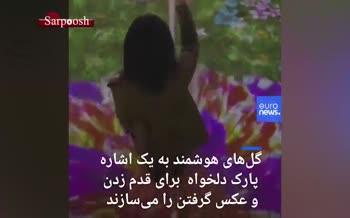 فیلم/ گلهای هوشمند به یک اشاره پارک دلخواه برای قدم زدن و عکس گرفتن میسازند