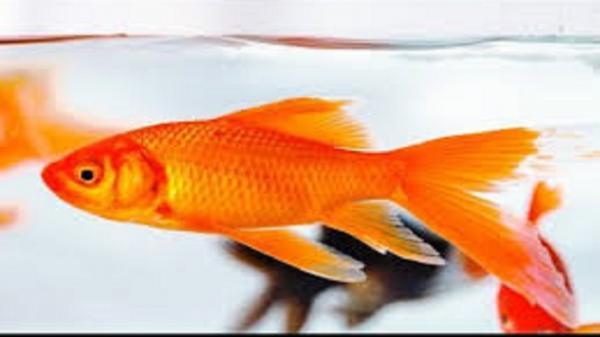 صید ماهی قرمز غولپیکر در دریاچه کارولینای جنوبی/ عکس