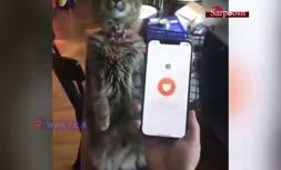 فیلم/ ترجمه زبان گربهها با نرم افزار Meowtalk