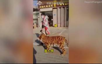 ببر تقلبی در چین