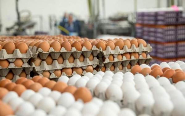 قیمت تخم مرغ,قیمت هر شانه تخم مرغ