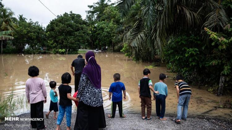 تصاویر سیل مالزی,عکس های سیل مالزی,تصاویری از سیل در کشور مالزی