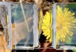 سلول خورشیدی,سلول خورشیدی شفاف