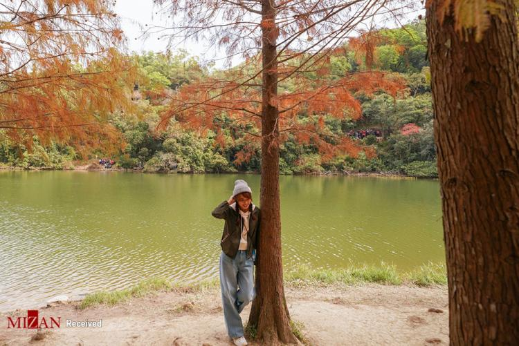 تصاویر شاخ و برگ,عکس های شاخ و برگهای رنگارنگ,تصاویر پارک ملی لاو شویی هئونگ