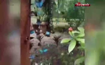 فیلم/ باغ پروانه در نزدیکی شهر پاتایای تایلند
