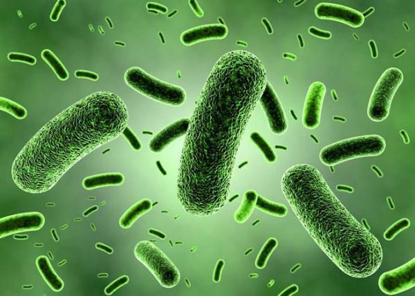 عفونت باکتریایی,ماده ای برای پیشگیری از عفونت باکتریایی