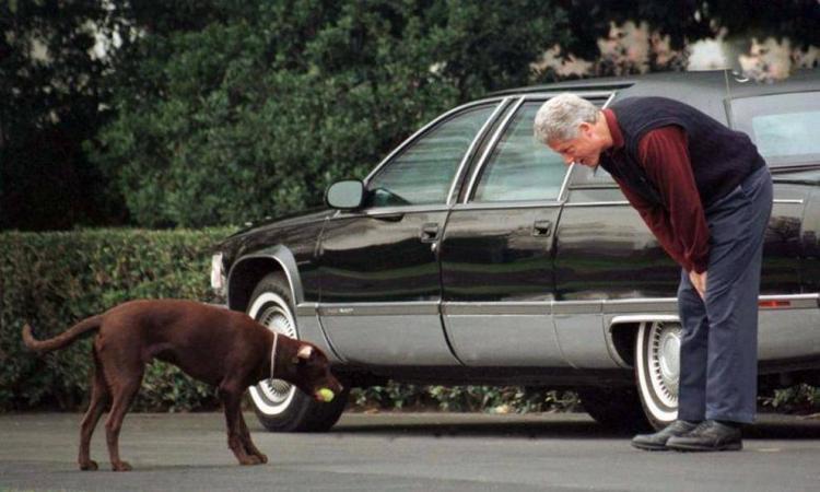 تصاویر حیوانات روسای جمهور آمریکا,عکس سگ جو بایدن,عکس سگ جورج بوش