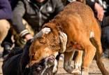 جنگ خونین سگ ها در شهر گلوگاه مازندران,جنگ سگ ها