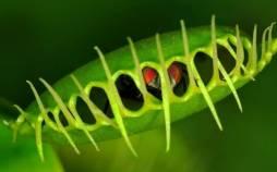 ونوس مگس خوار( Dionaea muscipula),تولید میدان مغناطیسی