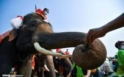 تصاویر روز ملی فیل ها در تایلند,عکس هایی از روز فیل در تایلند,تصاویر روز فیل در کشور تایلند