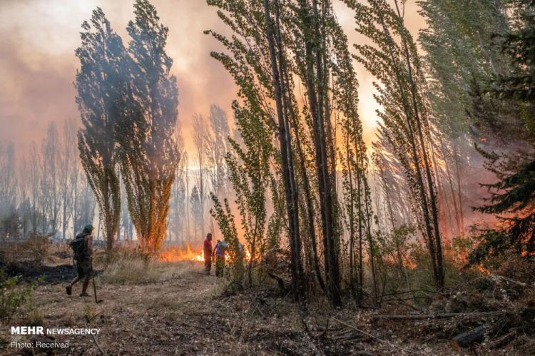 تصاویر آتش سوزی در جنگلهای آرژانتین,عکس های آتش سوزی آرژانتین,تصاویر آتش گرفتن جنگل های آرژانتین