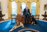 سگهای جو بایدن,عکس سگهای جو بایدن