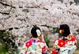 آداب جشن تولد شکوفهها در ژاپن,جشن شکوفه ها در ژاپن