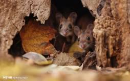 تصاویری زیبا از جوندگان کوچک,عکس های جوندگان,تصاویر جوندگان در جنگل