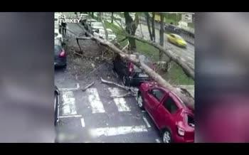 فیلم | لحظه سقوط درخت غولپیکر روی سر عابرین و چند ماشین