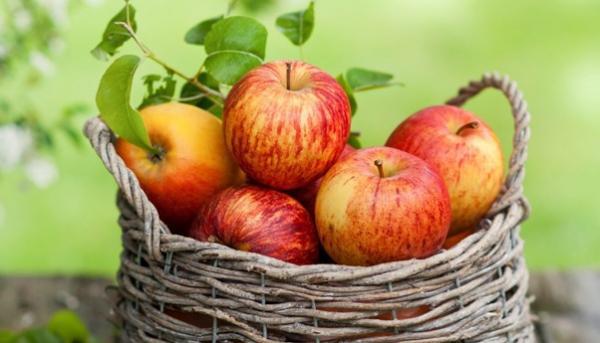 دستور رژیم سیب,رژیم سیب,معایب رژیم سیب