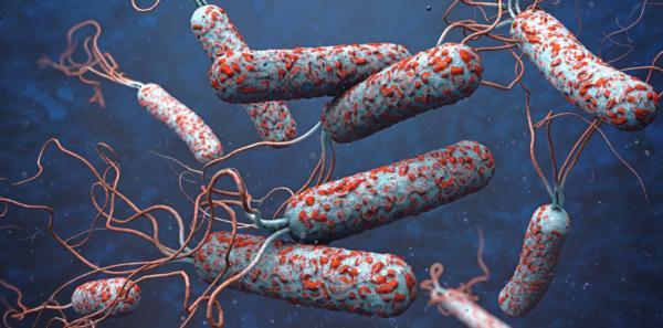 عامل وبا,علایم وبا,بیماری وبا