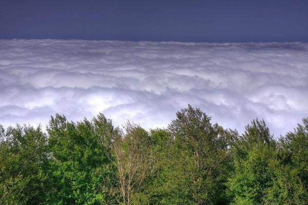 وضعیت جنگل ابر,جنگل ابر,جنگل ابر کجاست