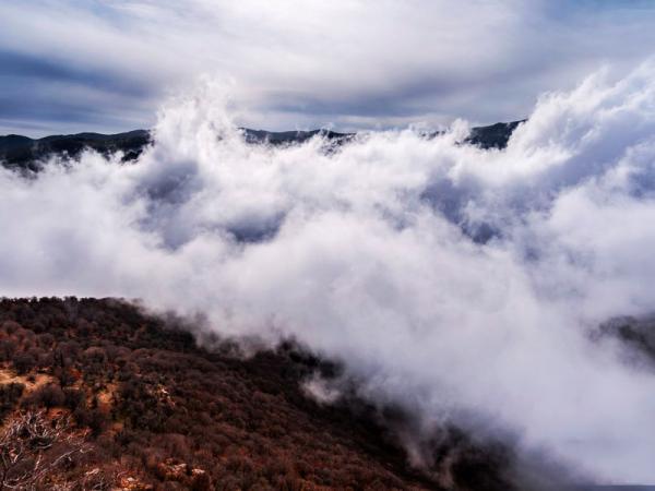 جنگل ابر سمنان,جنگل ابر,وضعیت جنگل ابر