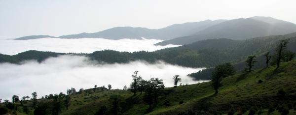 جنگل ابر,جنگل ابر شاهرود عکس,عکس جنگل ابر