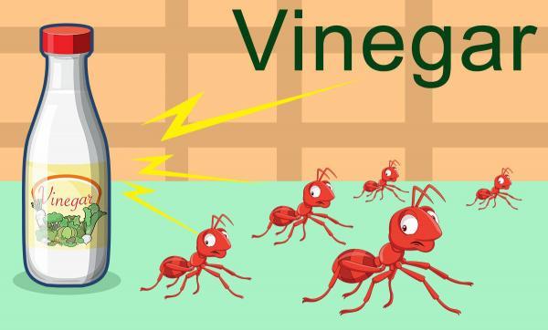 از بین بردن مورچه در شکر,از بین بردن مورچه در منزل,از بین بردن مورچه