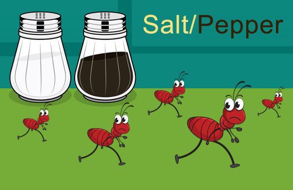 نابودی سریع مورچه ها,از بین بردن مورچه,برای از بین بردن مورچه